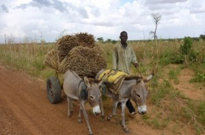 联合国:数百万刚果(金)人面临严重饥荒