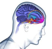 4 种对大脑健康有利的食物