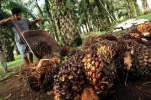 我国要求欧盟缓解对棕榈油的禁令