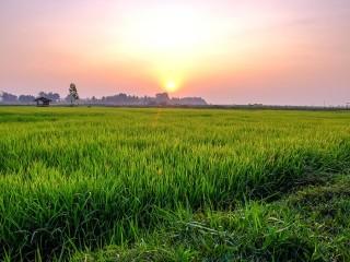 印尼 - 坦桑尼亚深谈农业合作的潜力
