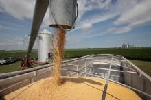 大豆对身体的健康益处