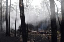 澳大利亚终于下雨   部分地区大火仍未熄灭