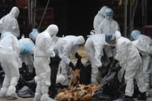 湖南发生高致病性禽流感疫情