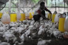 我国就中国禽流感蔓延的潜在提高警惕