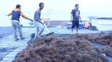 我国对华海藻出口因新冠病毒而受阻